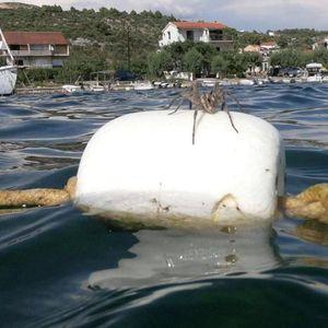 OGROMAN PAUK ISPREPADAO KUPAČE NA JADRANU: Više u more ne ulazim, umrla bih iste sekunde da ovo vidim