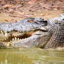 KROKODIL POJEO DEČAKA (10) PRED NJEGOVOM PORODICOM: Najveći reptil na svetu ga izvukao iz čamca i odvukao u vodu!