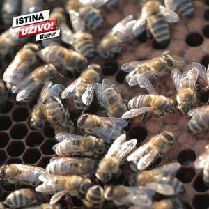 ZELENI GRAD: PČELE NE TRAŽE MNOGO, A DONOSE SLADAK PROFIT! Evo zašto je pčelarstvo postalo najpopularnija grana poljoprivrede u Beogradu!