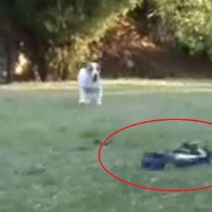 URNEBESNI VIDEO! Psi su u svom dvorištu ugledali veliku napast i krenuo je RAT do istrebljenja