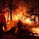 DRAMA BLIZU ELEKTRANE U ČERNOBILJU! Gori 20 hektara šume, gašenje vatre otežava RADIOKATIVNO ZRAČENJE!