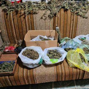 ZAPLENA U BAČU: Pao sa više od 4 kilograma marihuane, pogledajte kako je samo rasporedio po kauču da se suši