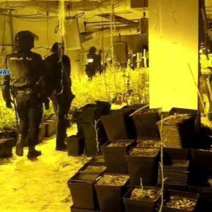 VELIKA AKCIJA ŠPANSKE POLICIJE: Zaplenjeno 2 tone marihuane, među uhapšenima i Srbi