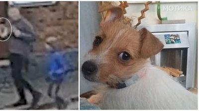 Крадец му го грабнува кученцето на малото дете, но тоа не се откажува така лесно од него