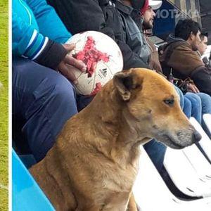 На сите натпревари на парагвајскиот фудбалски клуб можете да видите куче, а за тоа постои срцезатоплувачка причина