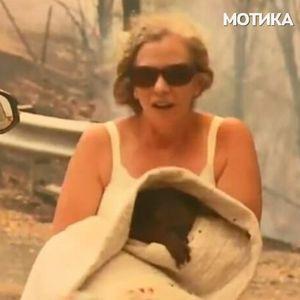 Жената се соблече за да ѝ го спаси животот на коалата која останала заробена во шумскиот пожар