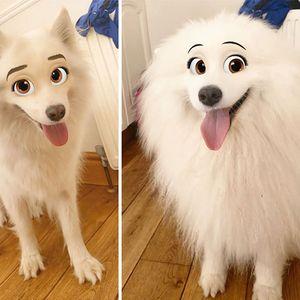 30 Најдобри фотографии од новиот Снепчет филтер кој го претвора вашито куче во Дизни карактер