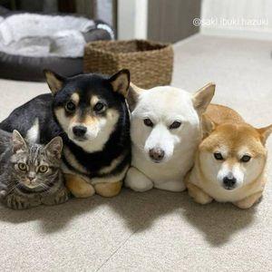 Мачка пристигнала во семејство со 3 кучиња, набрзо започнала да се однесува како нив