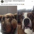 """Ископала компир кој личи на нејзиното куче: """"Уште се смеам"""""""