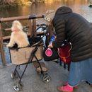 12 Чудни фотографии од Јапонија: локалното население не би ни забележало нешто невообичаено