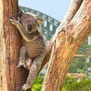 Земја со најчудни правила во светот: Ова може да го видите само во Австралија
