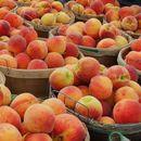 Русија ја укина забраната за увоз на коскесто овошје од Македонија