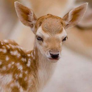 Во Зоолошката градина се роди ново еленче кое го доби името Лаки