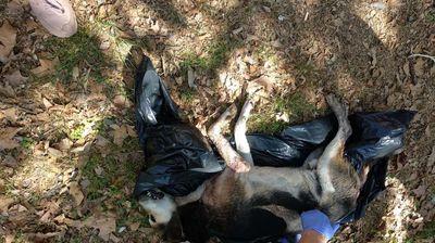 Приведено лицето коe со секира уби две кучиња во Аеродром