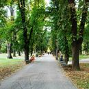 Скопјанец во Градскиот парк го врзал својот малолетен внук за дрво, а внуката ја удирал по глава