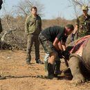 Ретките животински видови на отстрел на шверцери