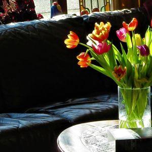 Овие цвеќиња во домот носат љубов, пари и среќа