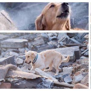 ПОТРЕСНА ФОТОГРАФИЈА од земјотресот во Измир се шири на социјалните мрежи