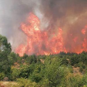 Гори околу Пехчево – локалното население има потреба од помош за гасење на огнената стихија (снимка)