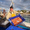 Britain to become one of only two countries to export shellfish to China under new laws