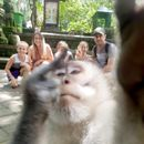 Photobombing monkey gives one-finger salute as he ruins family holiday pic in Bali forest