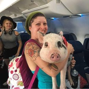 Weirdest ANIMALS spotted on flights from a baby kangaroo to a miniature horse