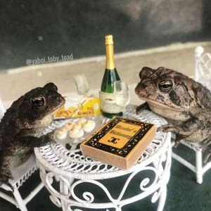 Toad goes viral after owner shares of him browsing the net and drinking champagne in a dolls' house