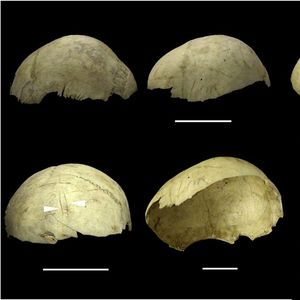 Our ancestors turned skulls into 'drinking cups' after eating head flesh just 4000 years ago, experts believe