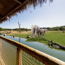 First look at West Midland Safari Park's new lodges with open views of the elephants and cheetahs