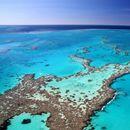 Unesko hoće da uvrsti koralni greben kod Australije u ugrožene...