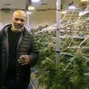 Tajson je potrošio sve pare zarađene od boksa, a sada ima biznis sa marihuanom od milion dolara