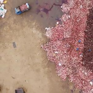 UZNEMIRUJUĆE scene iz Azije: Lisice žive drali, pa ih bacali na gomilu, krv lije na sve strane