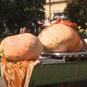 Na Danima ludaje pobedila tikva teška 588 kilograma: Ponosni vlasnik otkriva u čemu je tajna uspeha