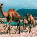 Neotkriven arapski dragulj: Ko nije bio u Omanu, taj nije upoznao dušu Bliskog istoka