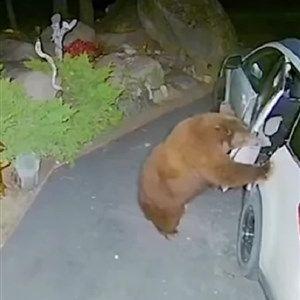 Нема да верувате што направи оваа мечка