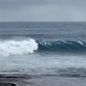 Погледнете како делфини сурфаат на бранови