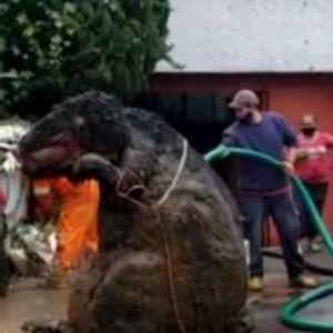 """Работници останале шокирани откако пронашле """"гигантски стаорец"""""""