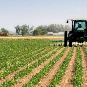 Истекува рокот за пријавување штети од невремето во земјоделството