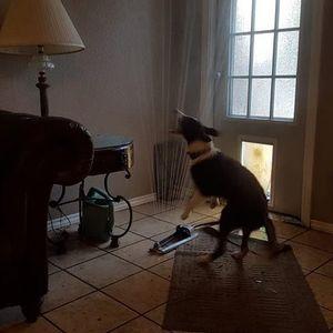 Куче се разладува во домот