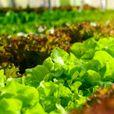 Нови 20 милиони денари за агро-секторот преку Програмата за рурален развој на земјоделството