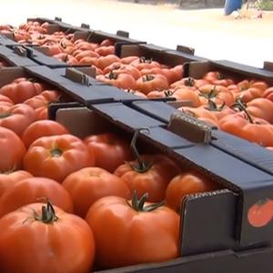 Вратени 17 тони макеоднски домат наменет за руски пазар