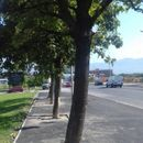 Реакција од Град Скопје за фотографиите од асфалтираното дрво