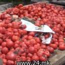 Телевизија 24: Нема откуп на домати во струмичко, Миниитерството за земјоделство договара вишокот домати да го откупат домашните преработувачки