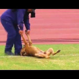 "ТОП моменти кога животните ""владеат"" на фудбалскиот терен"