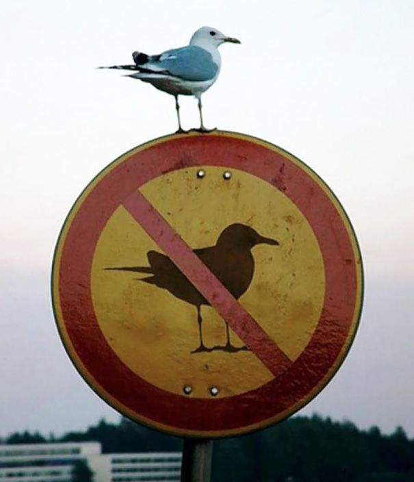 [Image: first-world-anarchists-breaking-rules-11...d__605.jpg]