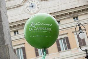 """Cannabis, avanza la proposta di un referendum per la legalizzazione. Civati: """"Legge di civiltà"""""""