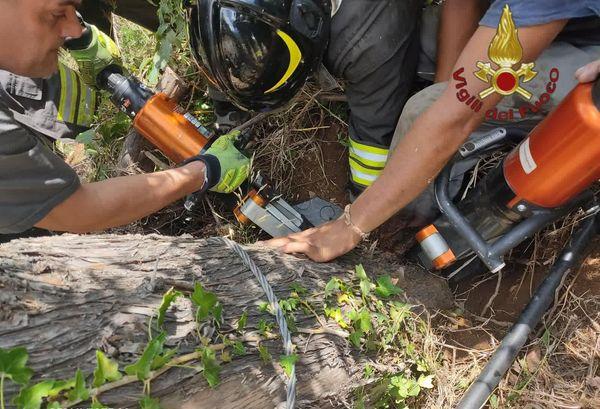Uomo taglia un albero, la pianta cade e resta intrappolato