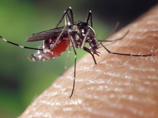 После укуса комара в ростовчанке поселился червь, увеличивший ей губу