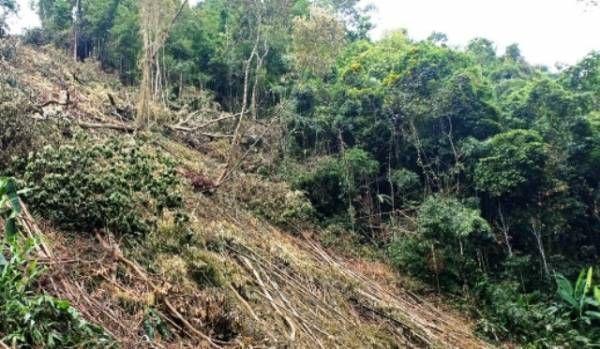 Hiện trường vụ phá rừng sản xuất là rừng tự nhiên ở xã Dương Quang (TP Bắc Kạn) đầu tháng 6.