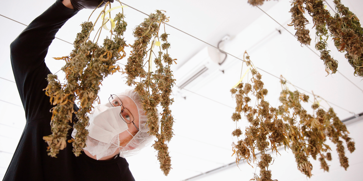 Inside the $1 billion marijuana 'unicorn' that operates out of a once-abandoned Hershey's factory